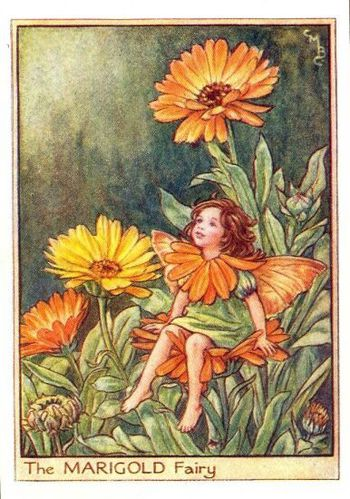 marigold flower fairy