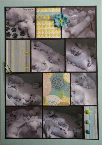 damier-chiots-webcam-002.JPG