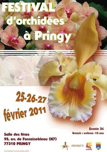 pringy orchidees