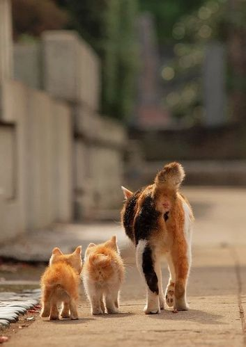chat-et-bebes.jpg