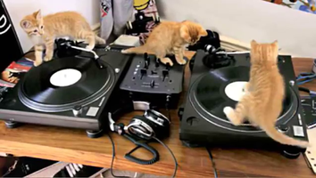 dj-cat-copie-1.png