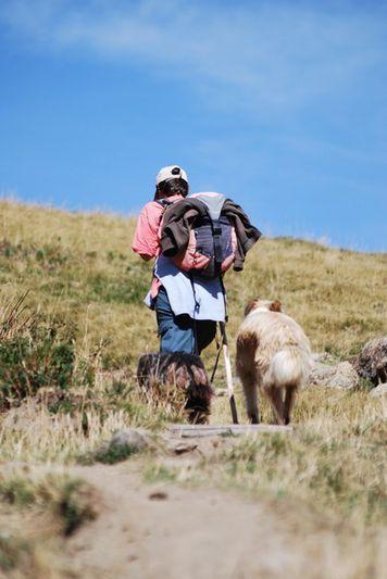 berger et ses chiens