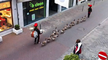 duck-parade.png