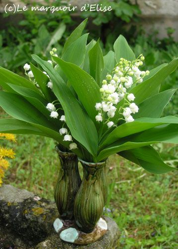 Muguet-010513--1b-.jpg