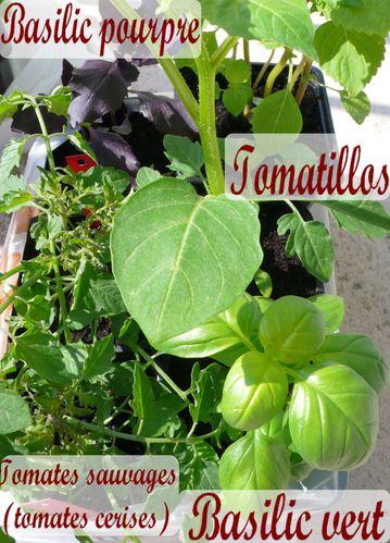 plantesrares2010achat2