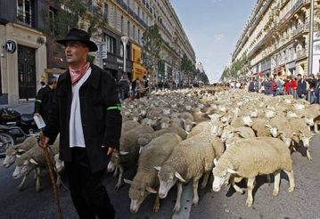 1-stockbreeders-with-thousands-of-sheep-simulate-a-transhum.jpg