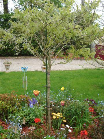 Une fouine dans mon jardin le jardin enchant for Anti fouine maison
