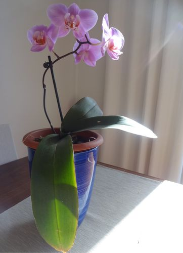 orchideesmai2013.jpg