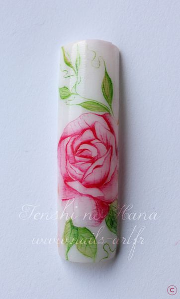 rose aquarelle 1er avril 2013