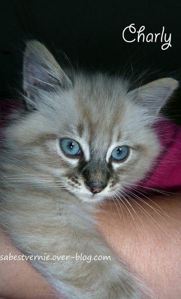 Charly-cute-baby-cat-1.jpg