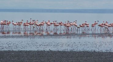 422-LAC-NATRON-Flamands.JPG