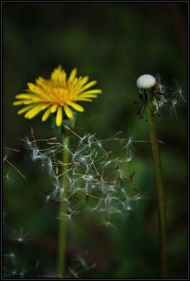 Macro---Fleurs--Plantes--Vegetaux-.-6180.JPG