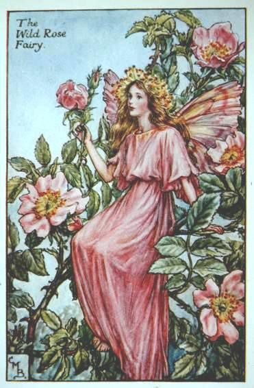 wild rose flower fairy