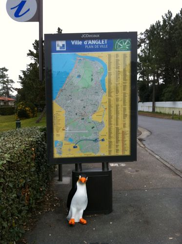 Pingu-Anglet.jpg