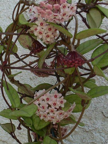 le jardinet fleuri 005-copie-1
