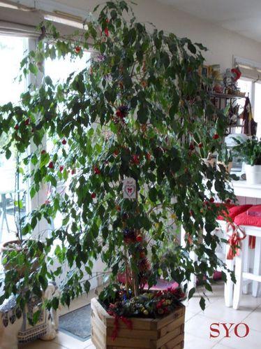 Ficus-de-Noel--Mamigoz.jpg