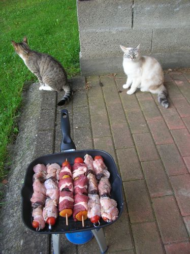Pesee-des-chats-005.JPG