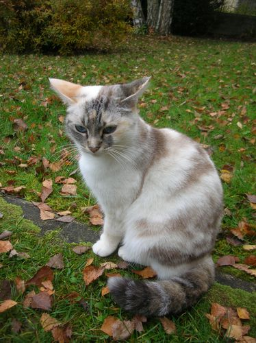 Chats-d-automne-001.JPG