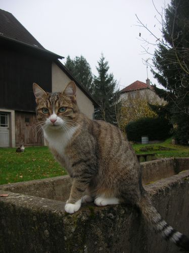 Chats-d-automne-007.JPG