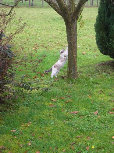 Chats-d-automne-008.JPG