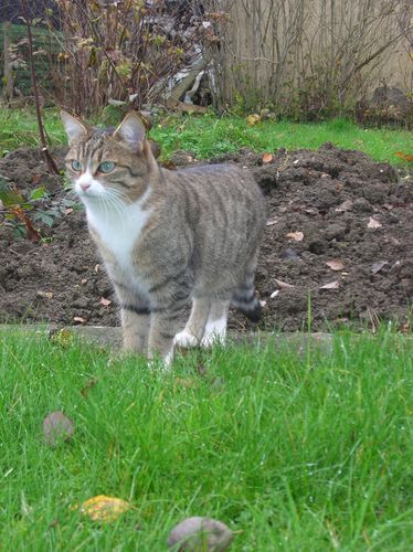 Chats-d-automne-011.JPG