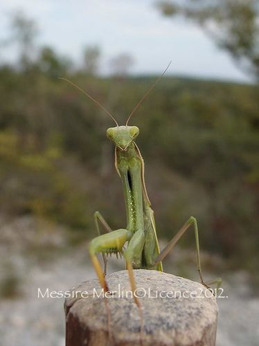 Mantes-portrait_resultat-copie-1.JPG