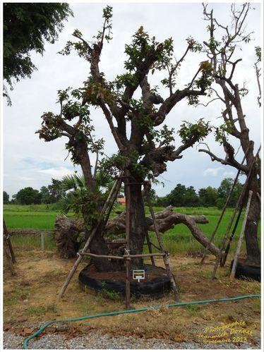 arbres 10 modifié-1