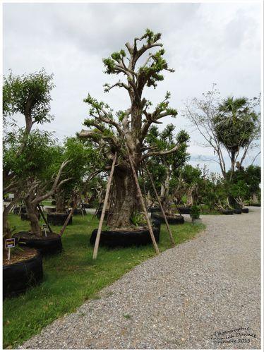 arbres 11 modifié-1