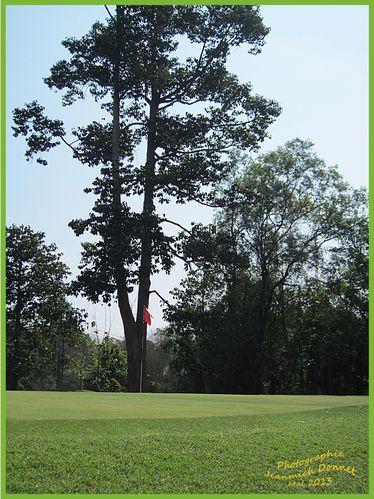 golf 33 modifié-1