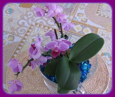 POT-ORCHIDEE 8