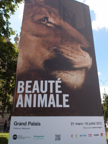 Beaute_animale.JPG