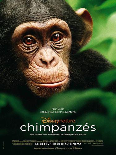 Affiche chimpanzés