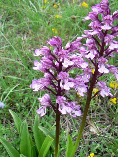 fleurs chartreuse 123
