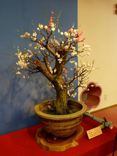 prunier-bonsai-6.jpg