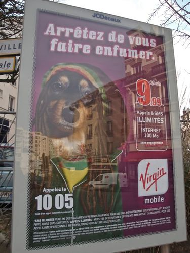 affiche Virgin phone chien rasta enfumé