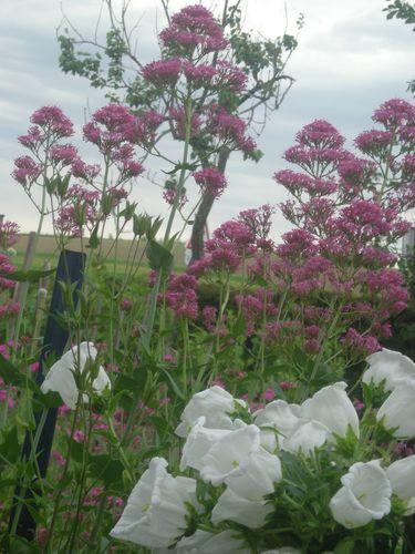 jardin juin 2010 005