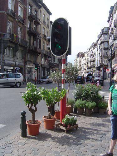 Bruxelles, en allant vers le canal, plant de vigne