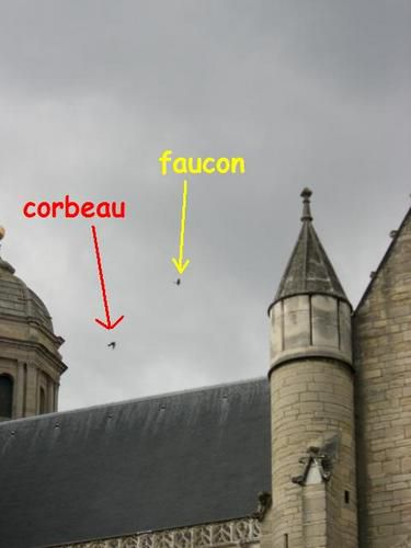 Faucon-vs-corbeau-4-OK.JPG
