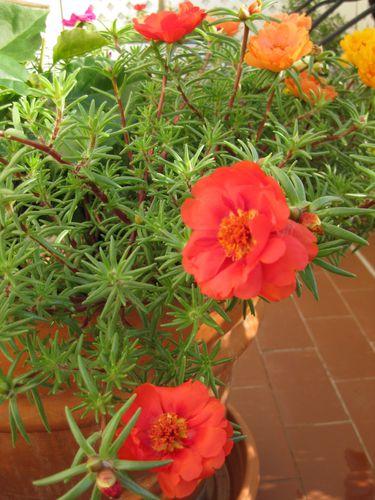 fleurs-0154.jpg