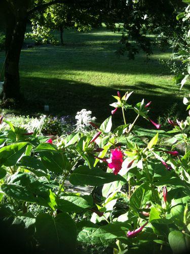 fleurs-jardin-0652.jpg
