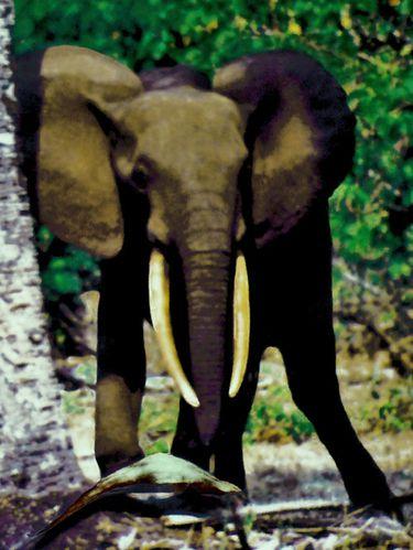 1176-Elephant-a-NYONIE.jpg