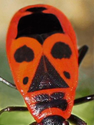 masque africain insecte