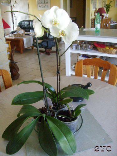 Boutourage--orchidee-mamigoz--5-.JPG