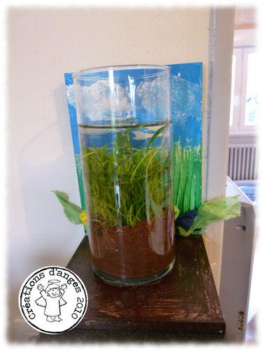 plantes-Eleo-1.jpg