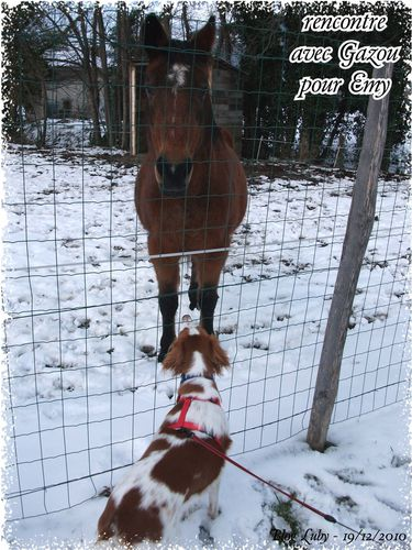 2010 19 12 ballade sassenage chevaux (1)