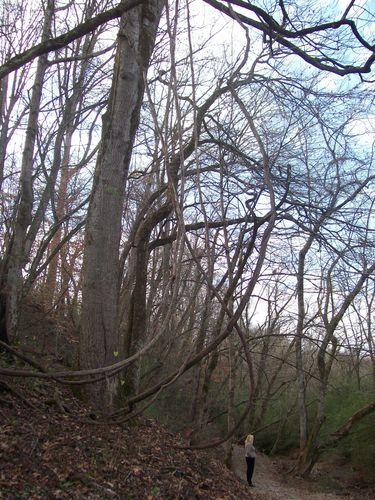 Walk trail Murphy (2) - Copy