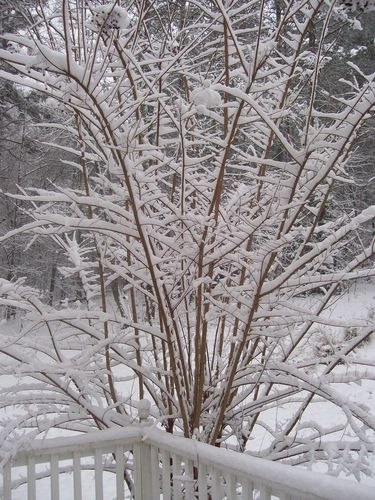 Winter time 2010 (20)