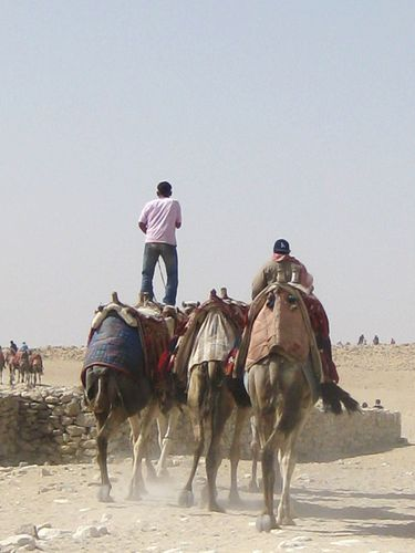 pyramides egypte février 2010 046