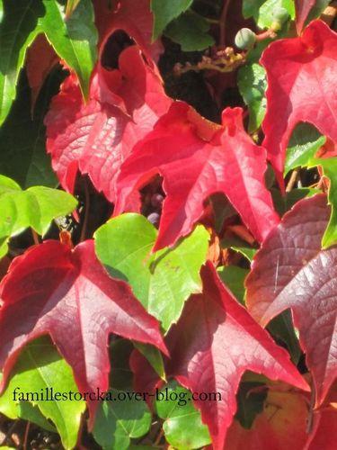 vigne automne