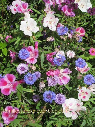 wesserling fleurs variees